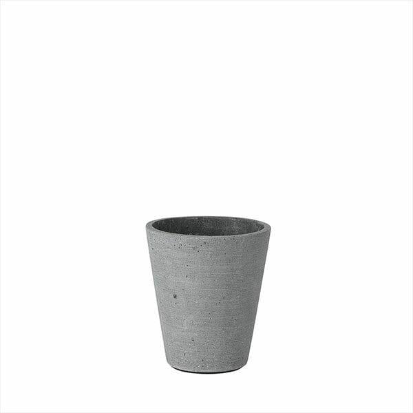 Blomkruka Coluna, Mörkgrå, Liten