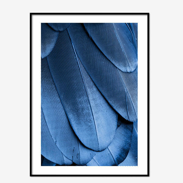 Poster Blue Feathers