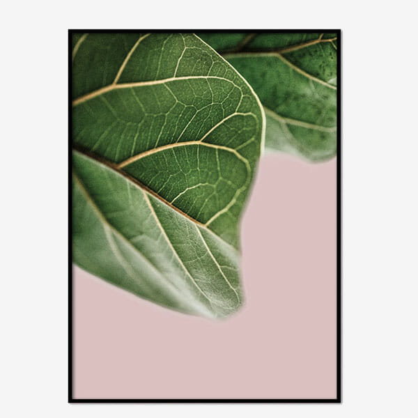 Poster Fig Leave No 2