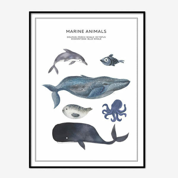 Poster Marine Animals