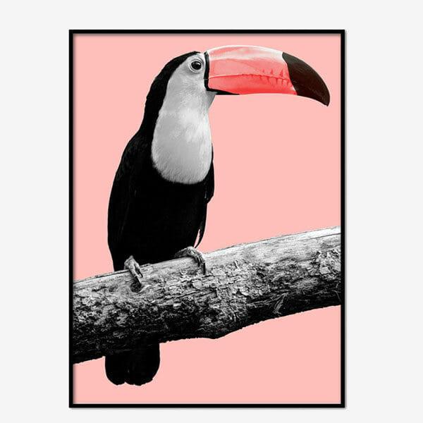 Poster Pink Bird