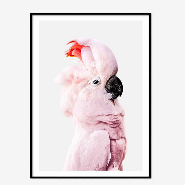 Poster Pink Parrot