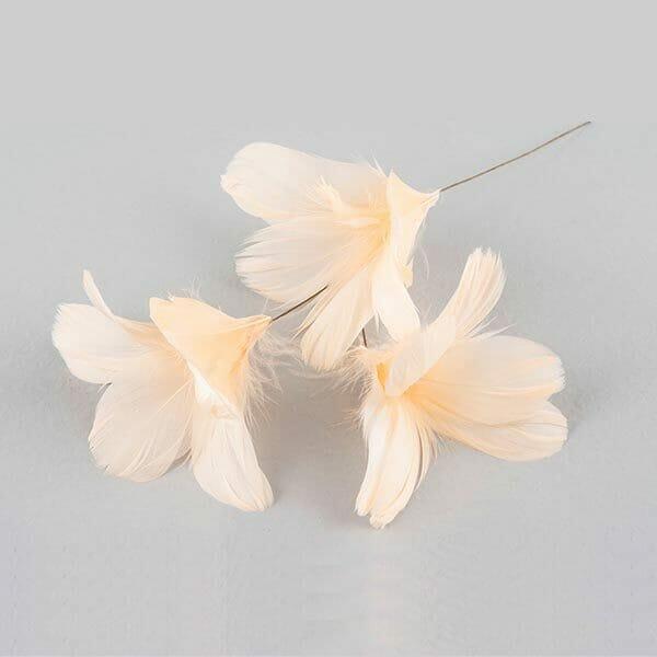 Fjädrar blomma Aprikos, 12-pack