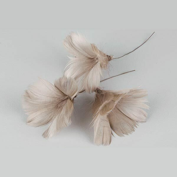 Fjädrar blomma Mullvad, 12-pack