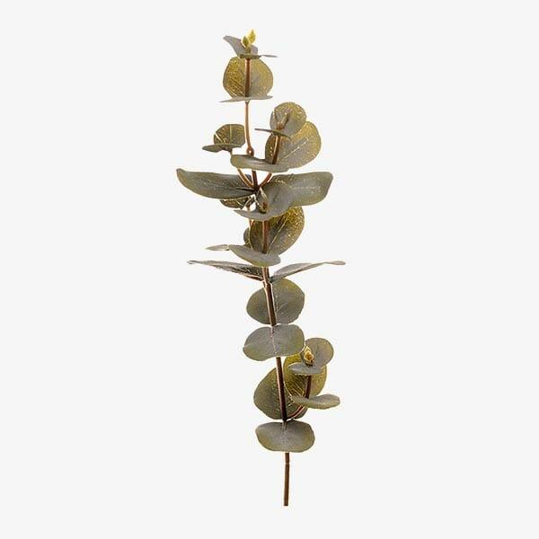 Eucalyptus kvist 40 cm, Grön