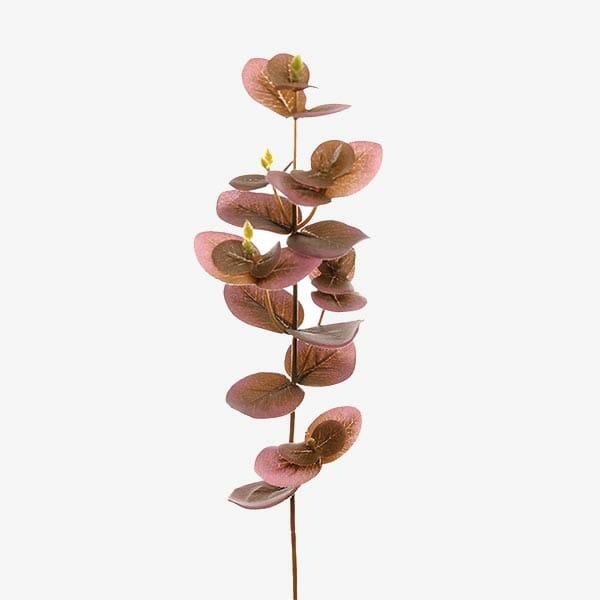 Eucalyptus kvist 40 cm, Röd